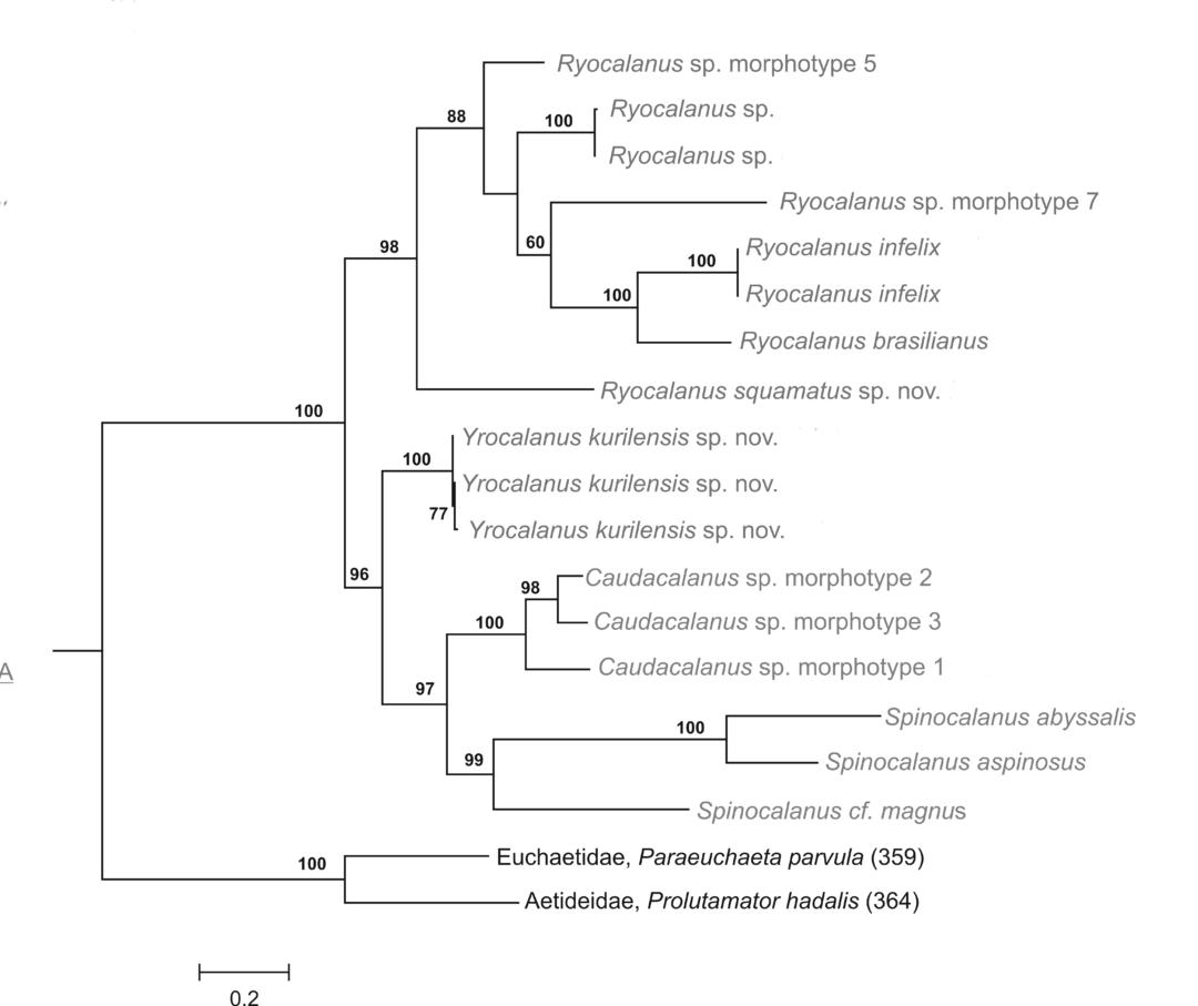 Phologeny Ryocalanoidea