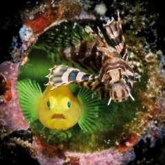 Sonderausstellung Leben unter Wasser 2020