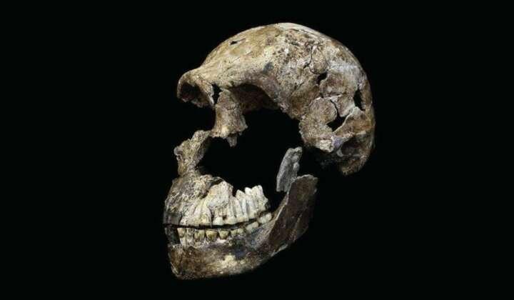 Homo naledi groß