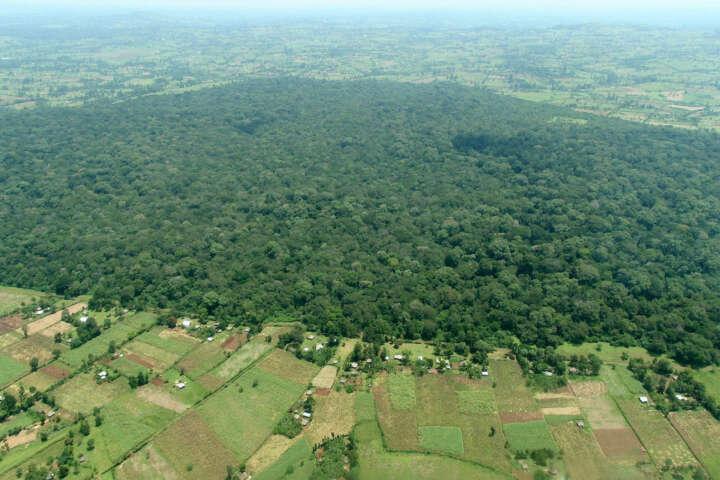Kakamega Wald Ostafrika