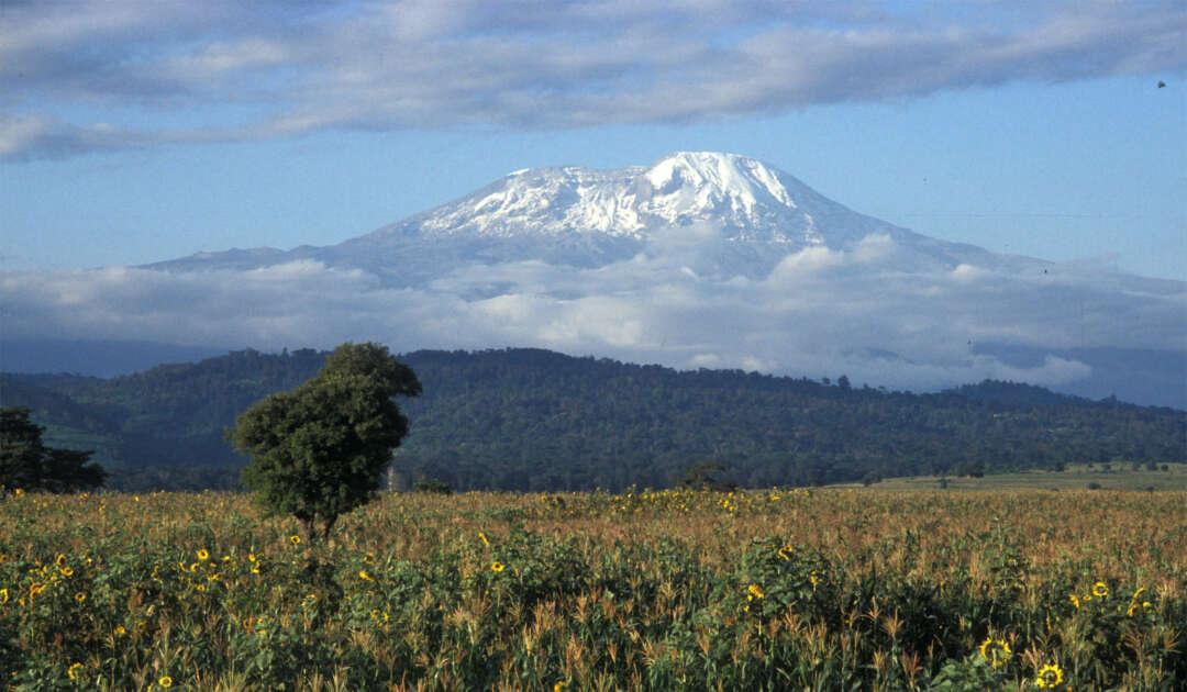 Kilimanscharo Ostafrika