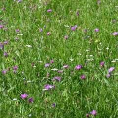 insektenwiesen