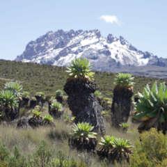 Kilimandscharo Alpine Zone