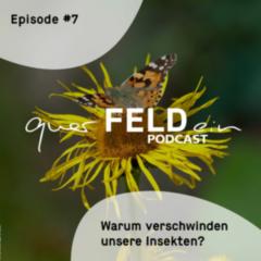 querfeldein-Podcast